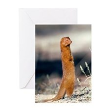 Slender mongoose Greeting Card