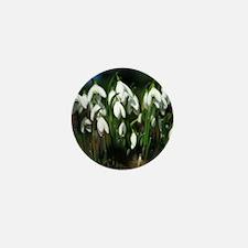 Snowdrops (Galanthus sp.) Mini Button