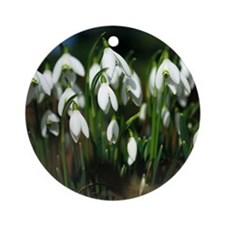 Snowdrops (Galanthus sp.) Round Ornament