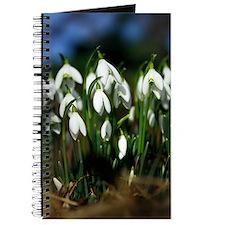 Snowdrops (Galanthus sp.) Journal