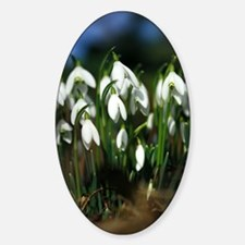 Snowdrops (Galanthus sp.) Decal