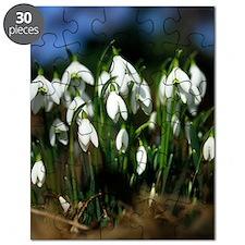 Snowdrops (Galanthus sp.) Puzzle