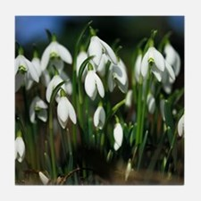 Snowdrops (Galanthus sp.) Tile Coaster