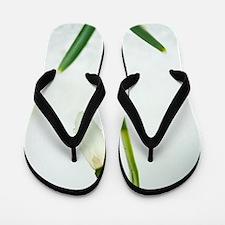 Snowdrops (Galanthus nivalis) Flip Flops