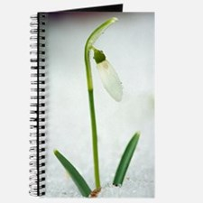 Snowdrops (Galanthus nivalis) Journal