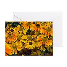 Sneezewort (Helenium sp.) Greeting Card