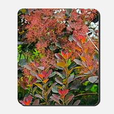 Smoke Bush (Cotinus sp.) Mousepad