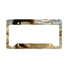 Warty crab in shallow water License Plate Holder