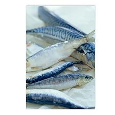 Mackerel Postcards (Package of 8)