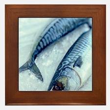 Mackerel Framed Tile