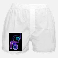 Male reproductive system, artwork Boxer Shorts