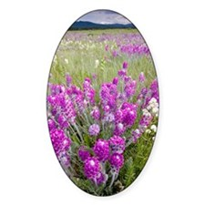 Showy locoweed and Mountain Locowee Decal