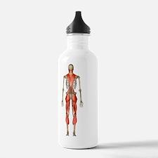 Male muscles, artwork Water Bottle