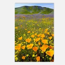 Shell Creek, California Postcards (Package of 8)