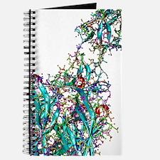 Sigma1 protein molecule, artwork Journal