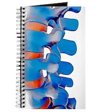 Lumbar spine, computer artwork Journal