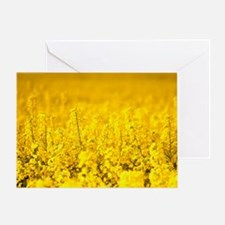View of a field of rape, Brassica na Greeting Card