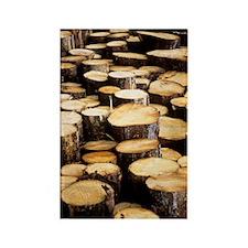 Logs Rectangle Magnet