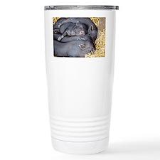 Vietnamese pot-bellied piglets Travel Mug