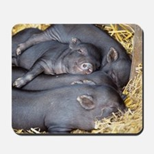 Vietnamese pot-bellied piglets Mousepad