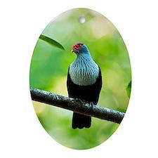 Seychelles blue pigeon Oval Ornament