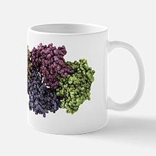 Krebs cycle enzyme, molecular model Mug