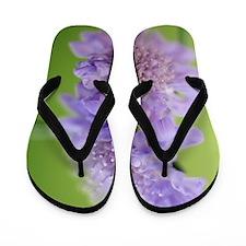 Scabious (Scabiosa columbaria) Flip Flops