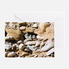 Sand martins Greeting Card