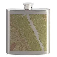Intestinal microvilli, TEM Flask