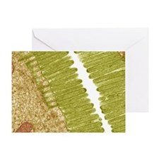 Intestinal microvilli, TEM Greeting Card