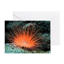 Tube anemone Greeting Card