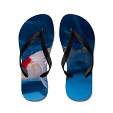Sanke Koi Carp pool Flip Flops