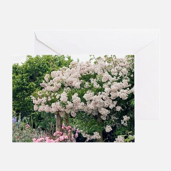 Rose (Rosa sp.) Greeting Card
