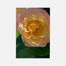 Rose (Rosa 'Della Balfour Harblen Rectangle Magnet