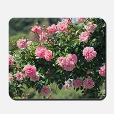 Rose (Rosa 'Paul Tran') Mousepad