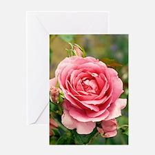 Rose (Rosa 'Parade') Greeting Card