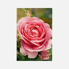 Rose (Rosa 'Parade') Rectangle Magnet