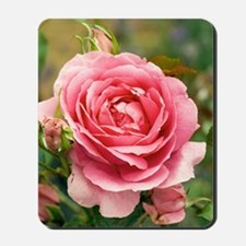 Rose (Rosa 'Parade') Mousepad