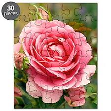Rose (Rosa 'Parade') Puzzle