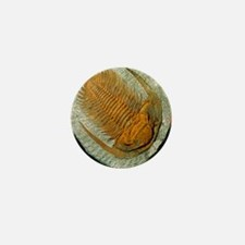 Trilobite fossil Mini Button