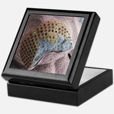 Trilobite eye fossil, SEM Keepsake Box