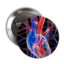 "Human heart, artwork 2.25"" Button"