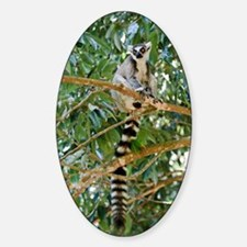 Ring-tailed lemur Decal