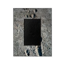 Trail of Laetoli footprints Picture Frame