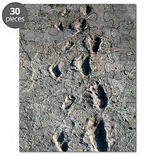 Trail of Laetoli footprints Puzzle