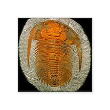 """Trilobite fossil Square Sticker 3"""" x 3"""""""