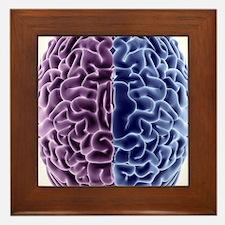 Human brain, computer artwork Framed Tile