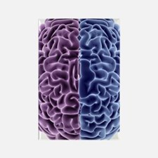 Human brain, computer artwork Rectangle Magnet