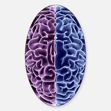 Human brain, computer artwork Sticker (Oval)