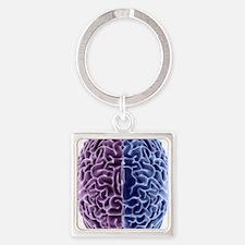 Human brain, computer artwork Square Keychain
